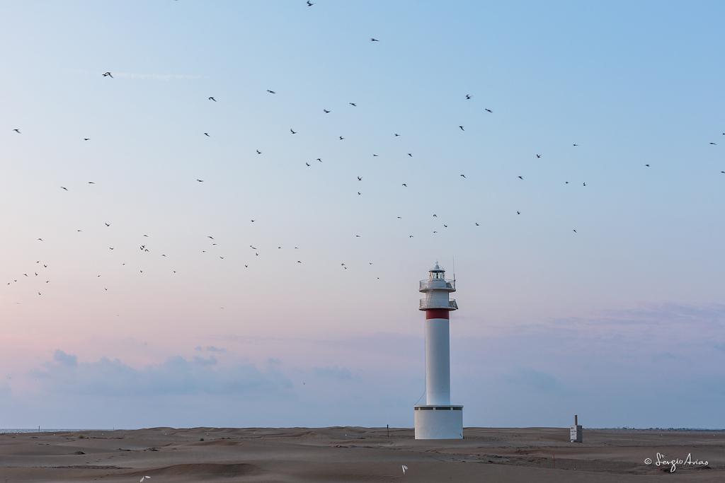 Bandada de aves junto al faro - Punta del Fangar