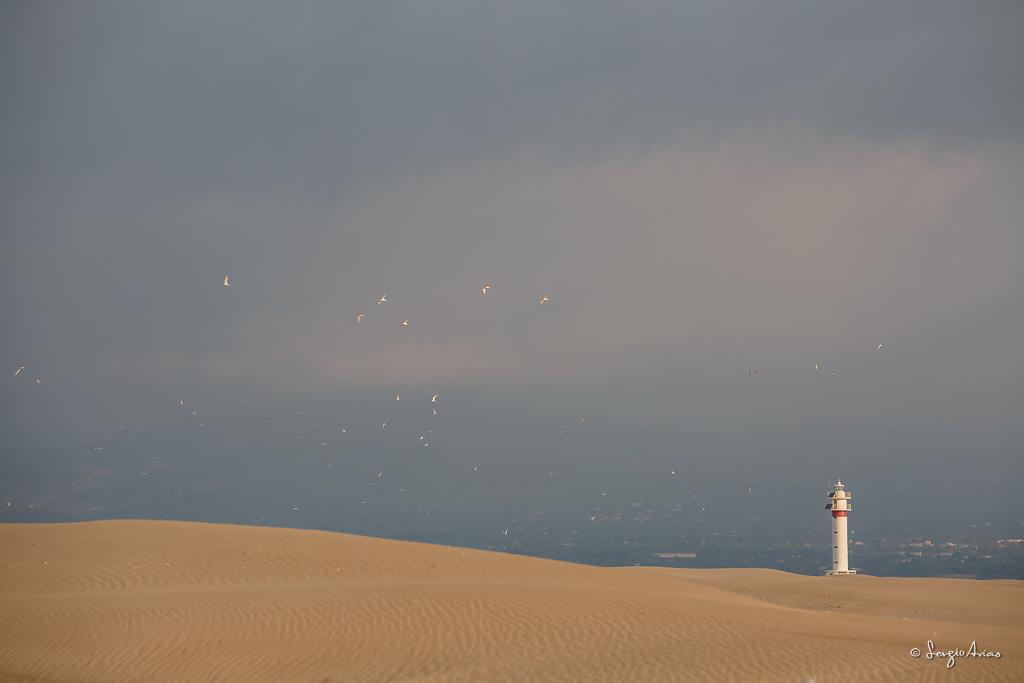 Punta del fangar - Delta del Ebro
