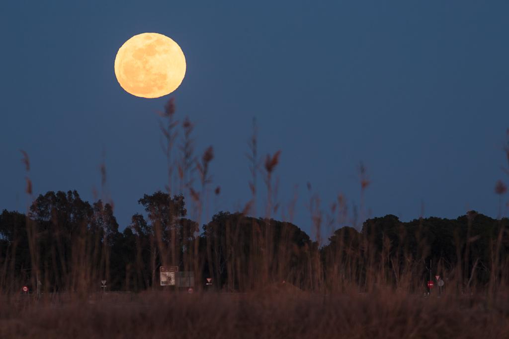 Luna en la Albufera