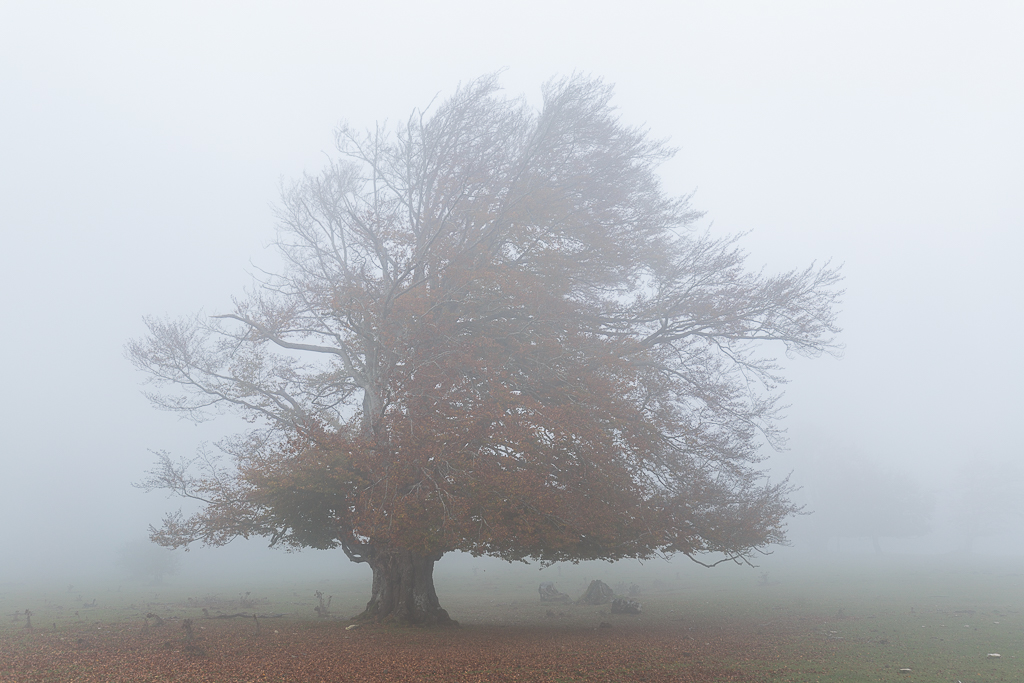 Árbol en la niebla - Sierra de Urbasa