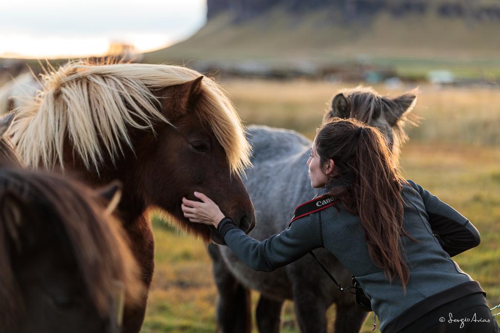 No te puedes ir de Islandia sin ver los caballos Islandeses
