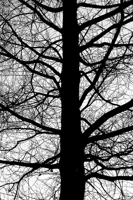 Arterias naturales - Alcalá de la Selva - Sergio Arias Ramón