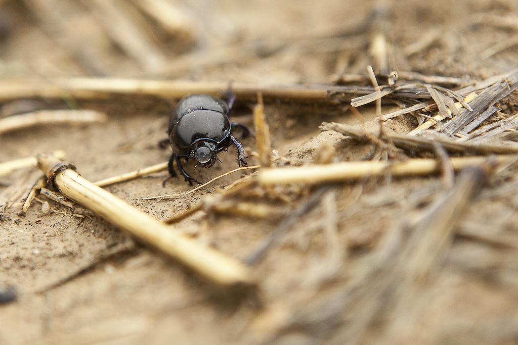 Escarabajo - Selva de Irati - Sergio Arias Ramón