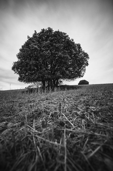 Dos árboles en la noche - Sergio Arias Ramón